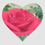 Red rose flowers with water droplets in spring heart sticker
