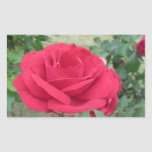 Red rose flowers with water droplets in spring rectangular sticker