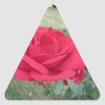 Red rose flowers with water droplets in spring triangle sticker