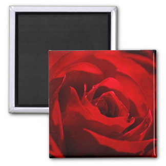 Red Rose For My Valentine Refrigerator Magnets