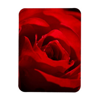 Red Rose For My Valentine Magnet