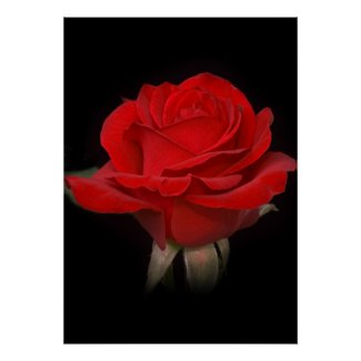 Red Rose for You Posters