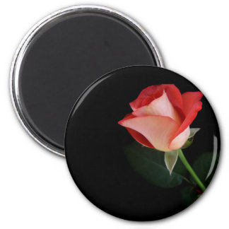 Red rose fridge magnet