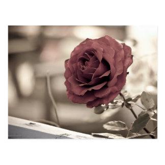 red Rose garden flower summer Postcard