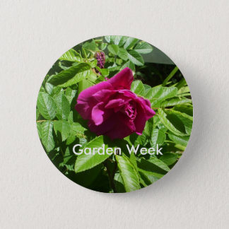 Red  Rose-Garden Week Pinback Button