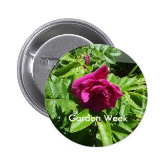 Red  Rose-Garden Week Pinback Button