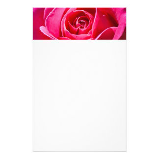 Red rose growing in a garden stationery