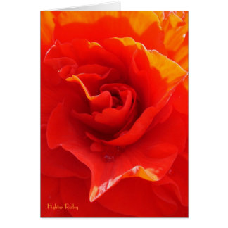 Red Rose Heart - Be My Valentine card