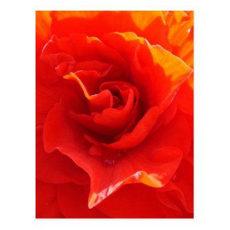Red Rose Heart - postcard