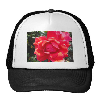 Red Rose / hot pink coral Trucker Hat