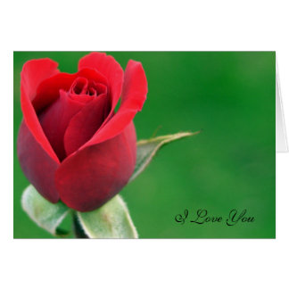 Red Rose, I love you Card