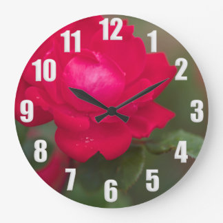 Red Rose in Bloom with Morning Dew - White Numbers Large Clock