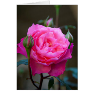 Red Rose In The Garden Of Hotel Carnavalet Card