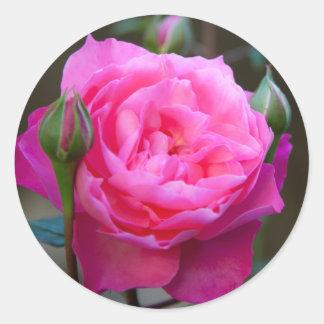 Red Rose In The Garden Of Hotel Carnavalet Classic Round Sticker