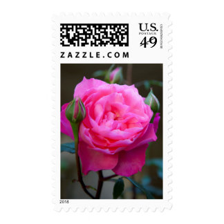 Red Rose In The Garden Of Hotel Carnavalet Stamp