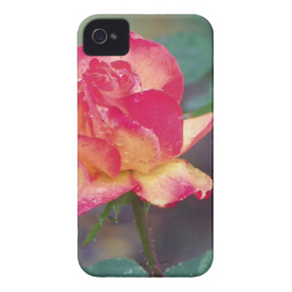 red rose in the rain iPhone 4 Case-Mate cases