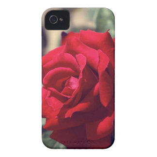 Red Rose iPhone 4 Case