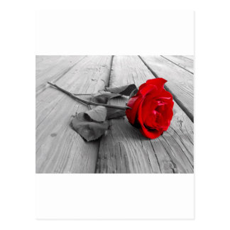 Red Rose Left On The Dock; I Still Love You Postcard