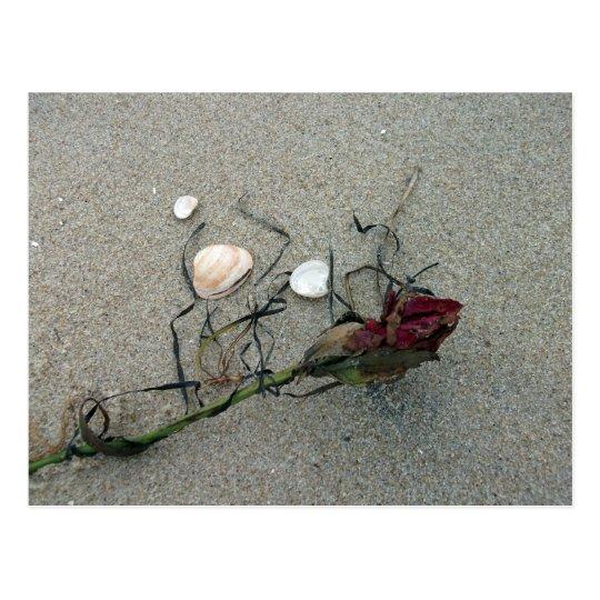 Red Rose Lost at Sea Postcard