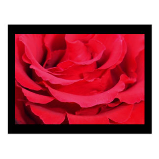 Red Rose (Love, Courage and Respect) Postcard