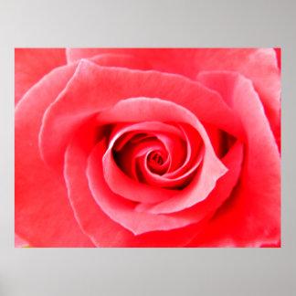 Red rose macro photo poster