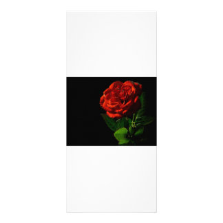 red-rose-macro-still-image-studio-photo rack card