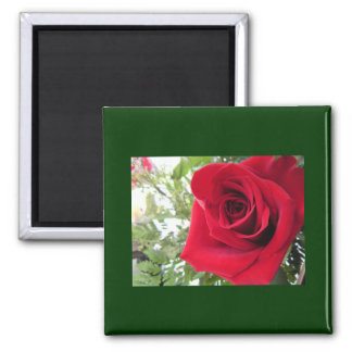 Red Rose Refrigerator Magnets
