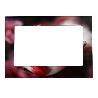 Red Rose Magnetic Picture Frame