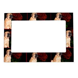 Red Rose Mastiff puppy Photo Frame Magnets
