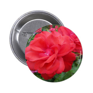 Red Rose of Love Pinback Button