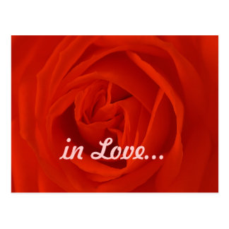 red rose of the love postcard