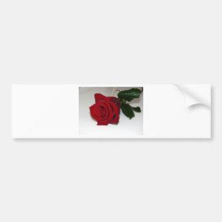 Red Rose On White Bumper Sticker