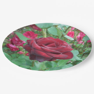 Red Rose Paper Plates for your next garden party