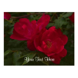 Red Rose Photo Postcard