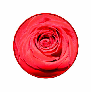 Red rose photo sculptures