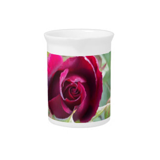 Red Rose Pitcher