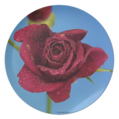 Red Rose Plate fuji_plate