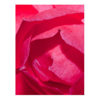 Red Rose Post Card