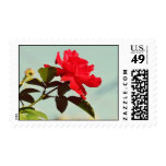 Red rose postage stamps