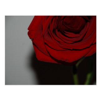 Red Rose Postcard