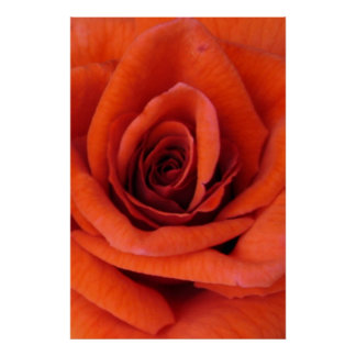 Red rose. poster