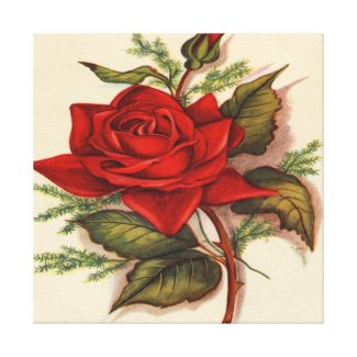 Red Rose Premium Wrapped Canvas (Gloss) Canvas Print