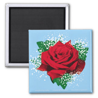 RED ROSE Sq Magnet
