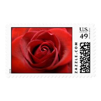 Red Rose Stamp