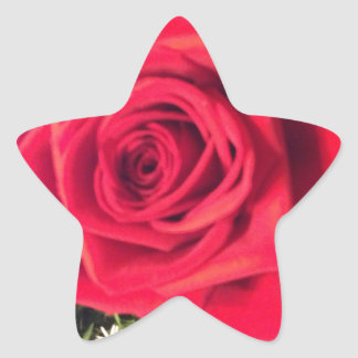 Red Rose Star Sticker