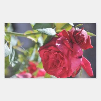 Red rose rectangular stickers