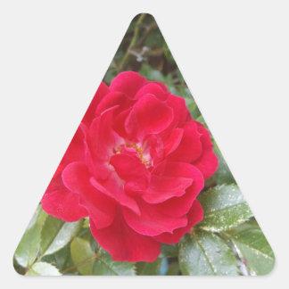 Red Rose Triangle Sticker