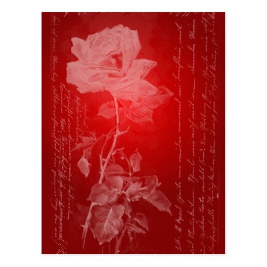 Red Rose Valentine Postcard