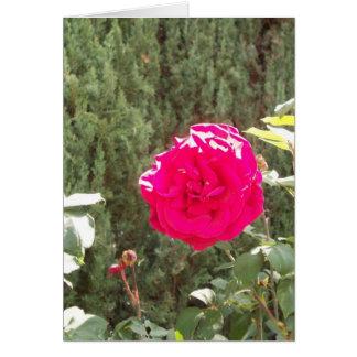 Red Rose Vert Card