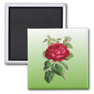 Red Rose w/Gradient Color 2 Inch Square Magnet